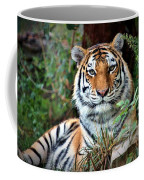 A Tigers Glance Coffee Mug