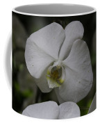 A White Orchid Flower Inside The National Orchid Coffee Mug