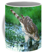 A Wild Juvenile Cooper's Hawk Drinks From A Pond Coffee Mug