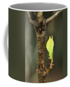 A Winter Sprout Coffee Mug