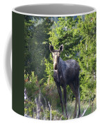 A Young Moose  Coffee Mug