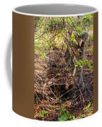 Abandoned Bench Coffee Mug
