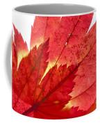 Acer From Beneath Coffee Mug