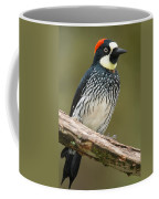 Acorn Woodpecker Melanerpes Coffee Mug