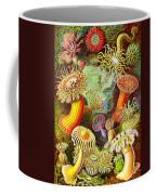 Actinia Sea Creatures Coffee Mug