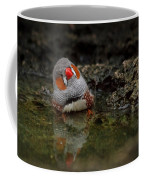 Adorable Zebra Finch Taking A Bath Coffee Mug