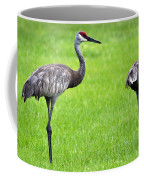 Adult Florida Sandhill Cranes Grus Canadensis Pratensis II Usa Coffee Mug