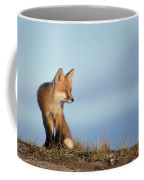 Adult Red Fox On The Tundra In Late Coffee Mug