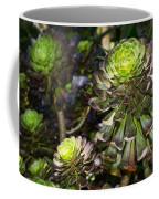 Aeonium Glow Coffee Mug