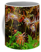 African Daisies In Aswan Botanical Garden On Plantation Island In Aswan-egypt Coffee Mug