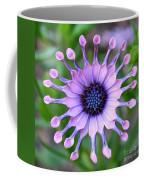African Daisy - Square Format Coffee Mug