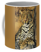 African Leopard Portrait Wildlife Rescue Coffee Mug