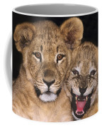 African Lion Cubs One Aint Happy Wldlife Rescue Coffee Mug