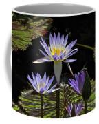 African Waterlily Dazzle -- Plus Dragonfly Coffee Mug