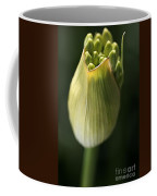 Agapanthus In The Daylight Coffee Mug