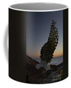 Ahinahina - Silversword - Argyroxiphium Sandwicense - Summit Haleakala Maui Hawaii Coffee Mug