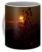 Ahinahina - Silversword - Argyroxiphium Sandwicense - Sunrise On The Summit Haleakala Maui Hawaii  Coffee Mug