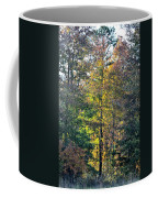 Alabama Forest In Autumn 2012 Coffee Mug