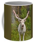 Albino Reindeer Coffee Mug