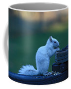 Albino Squirrel Coffee Mug