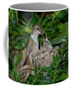 Allens Hummingbird Feeds Young Coffee Mug