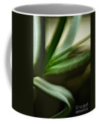 Aloe Coffee Mug