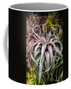 Aloe Vera Cactus Succulent Plant Indoor In Summer Coffee Mug