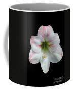 Amaryllis #2 Coffee Mug