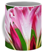 Amaryllis Flowers And Buds In The Rain Coffee Mug