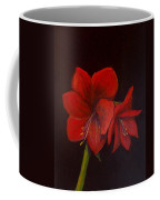 Amaryllis On Black Coffee Mug