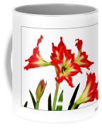 Amaryllis On White Coffee Mug