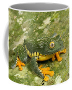 Amazon Leaf Frog Coffee Mug