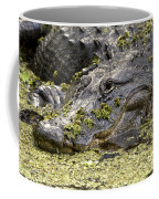 American Alligator Print Coffee Mug