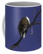 American Bald Eagle 1 Coffee Mug