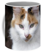 American Calico Cat Portrait Coffee Mug