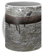 American Dipper   #7963 Coffee Mug
