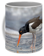 American Oystercatcher Feeding On Clam Coffee Mug