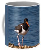 American Oystercatcher Coffee Mug