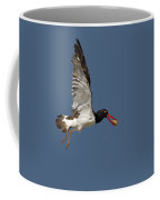 American Oystercatcher In Flight Coffee Mug