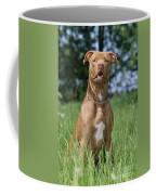 American Pit Bull Terrier Coffee Mug