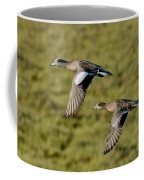 American Wigeon Pair In Flight Coffee Mug