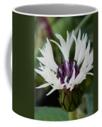 Amethystt In Snow  Coffee Mug