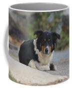 Amish Dog Coffee Mug