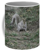 Gray Squirrel Among The Pine Cones Coffee Mug