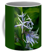 Amsonia Blue Stars Coffee Mug
