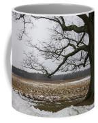 An Appleton Tree And Field In Winter Coffee Mug