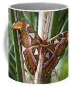 An Atlas Moth  Coffee Mug