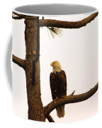 An Eagle Day Dreaming Coffee Mug