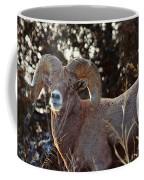 An Icy Stare Coffee Mug