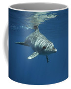 An Indo Pacific Bottlenose Dolphin Coffee Mug